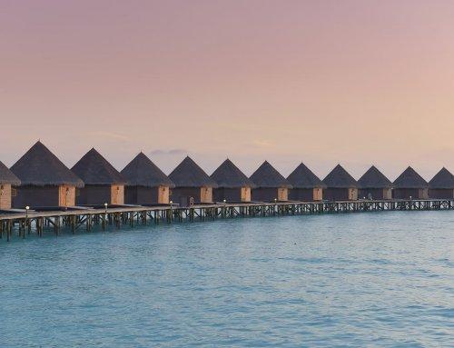 Thulhagiri Island Resort 蘇哈姬莉 藍色美人蕉