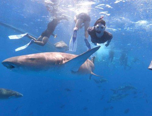 Shark Bay Snorkeling 鯊魚浮潛跳島遊